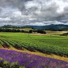 Valley Oregon 111 Best Willamette Valley Images On Willamette Valley