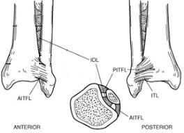 Anterior Distal Tibiofibular Ligament Plafond And Ankle Team Bone