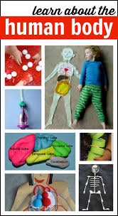 human body activities for kids i can teach my child