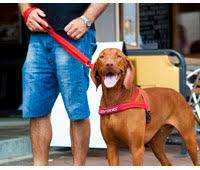 Comfort Flex Dog Harness Ezydog Online Shop U2013 Dog Leashes Collars Harnesses