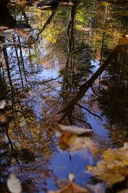 tree creek reflection trees free nature pictures by