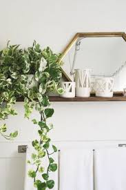 White Bedroom Plants 134 Best House Plants Images On Pinterest Plants Home And Gardening