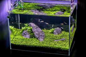 10 gallon planted tank led lighting nano nater s planted tanks details and photos photo 42592