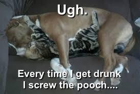 Drunk Cat Meme - cats love dogs meme anonamos3021