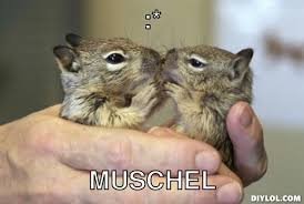 Now Kiss Meme Generator - squirrel kiss meme info