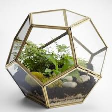 polygon glass terrarium polyvore