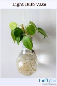 a light bulb vase thriftyfun