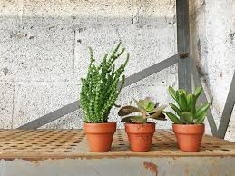 cute succulents succulent care guide keeping your tiny succulent cute in its