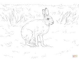 mountain hare coloring page free printable coloring pages