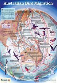 Migration Map Mapa La Migración De Las Aves Bird Migration Map