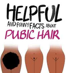 pubic hairs pics the best ways to keep your pubic hair in check hair removal