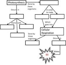 comparing photosynthesis and cellular respiration worksheet free