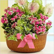 just flowers florist beyond just flowers precious plants for