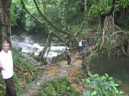living root bridges of meghalaya the hindu
