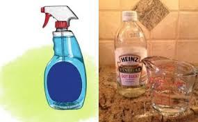 de fourmis dans la cuisine comment se débarrasser des fourmis dans votre cuisine grâce au vinaigre