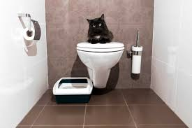 How Many Times Should You Go To The Bathroom How To Train A Cat To Do 5 Life Changing Things Reader U0027s Digest