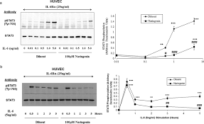 Kitchenaid P by Flavanoids Induce Expression Of The Suppressor Of Cytokine
