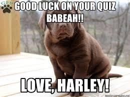 Chocolate Lab Meme - good luck on your quiz babeah love harley chocolate lab