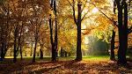 Wallpapers Backgrounds - Autumn 1366x768 wallpapers HD desktop