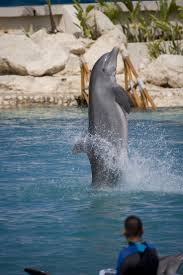 443 best dolphins images on pinterest nature ocean life and animals