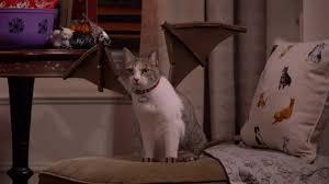 kit kat usa 2016 halloween commercial u201ckat lady u201d youtube