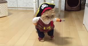Halloween Costume Cats Video Cat Dressed Pirate Blew Halloween
