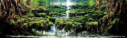 Aquascape Layout Stunning Highlights From The 2016 International Aquatic Plants