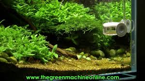 Green Machine Aquascape Riverbank Aquascape The Green Machine By James Findley Youtube