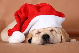 Cute Christmas Meme - christmas puppy cutest paw
