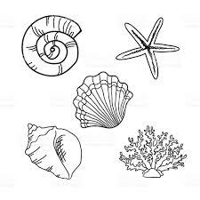 set of seashells stock vector art 510467634 istock