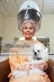 old ladies hair salon woman in hair salon with poodle stock photo masterfile