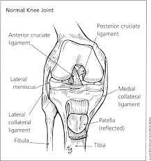 Anterior Fibular Ligament Acl Injuries American Family Physician