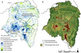 the impact of gold mining and agricultural concessions on the tree