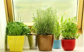 Window Sill Garden Inspiration Windowsill Herbs Designs Windows Herb Garden 10 Kitchen