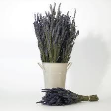 lavender bouquet lavender bouquets victorias lavender