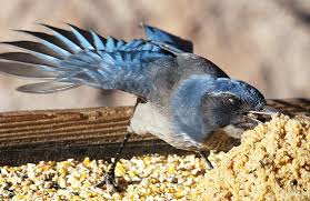 feeding birds a quick guide to seed types all about birds