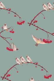 best 25 bird wallpaper ideas on pinterest bird wallpaper