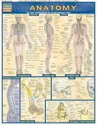 Anatomy And Physiology Human Body 41 Best Anatomy Physiology Images On Pinterest Human Anatomy