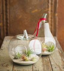 air plant terrariums happiness is homemade