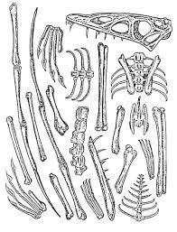 reconstructing fossil bones epicofevolution