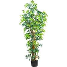 nearly 5188 curved bamboo silk tree 6