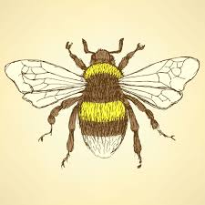 vintage bumble bee drawing