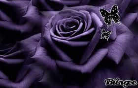 purple roses and butterflies picture 126538750 blingee com