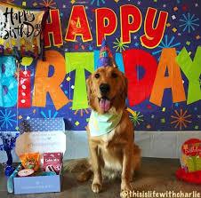 dog birthday party your dog s birthday photos newsday