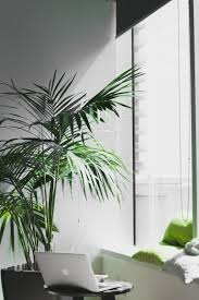 living room trees the best indoor trees and big plants to grow in your living room