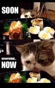 Soon Cat Meme - image 531962 soon know your meme