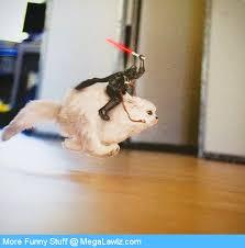 Star Wars Cat Meme - star wars cat megalawlz com