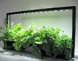 grow lights for indoor herb garden light for indoor gardening arrowhead plant is a great plant for low