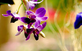 types of purple types of purple orchids 2560x1600 464 84 kb