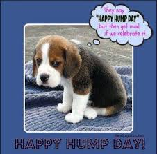 Hump Day Memes - hump day meme google search greetings one and all pinterest